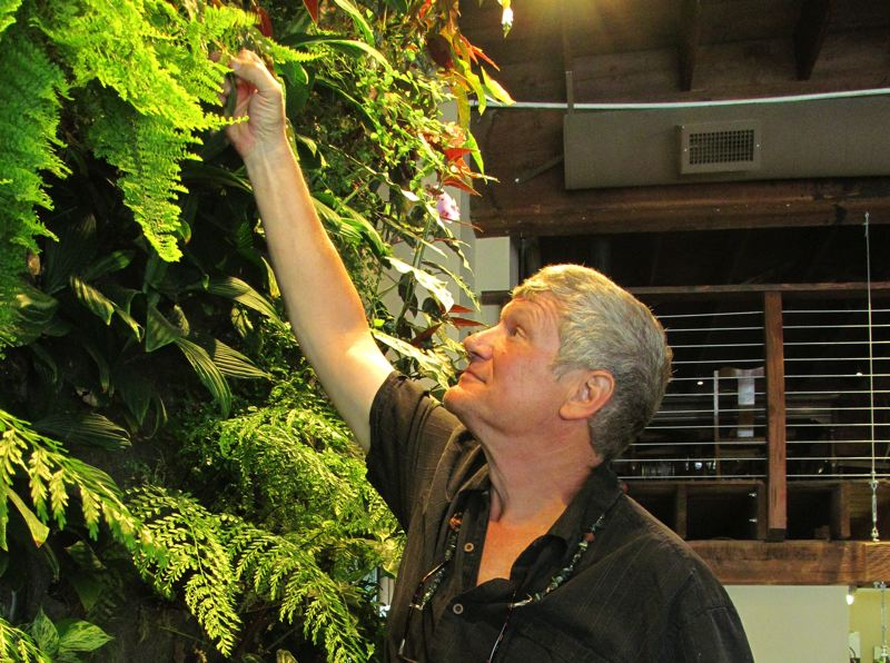 by: PHOTO: DICK TRTEK - Phil Yates checks on the plants that make up the large vertical garden inside Singer Hill Cafe. He said the garden looks good year-round.