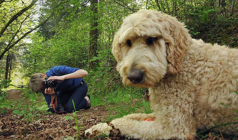 by: VERN UYETAKE - Pauline Zonneveld goes down low to get just the right angle for a shot of Maggie, her golden doodle.