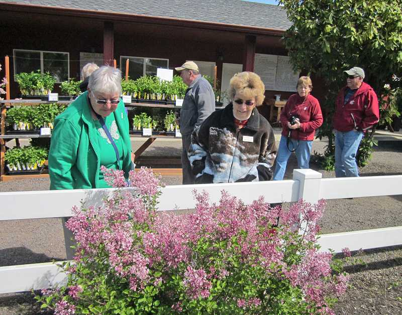 by: BARBARA SHERMAN - LILACS BLOOMING EVERYWHERE -  King City Travel Club members, including Dell Duda (left) and Mary Morgan, enjoyed touring the Hulda Klager home and gardens in Woodland, Wash., with the plant starts for sale (in the rear) being a popular place to stop.