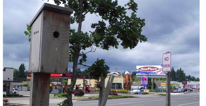 by: PHOTO BY: KYLIE WRAY - Jerry Herrmann and his crew of youth put up four swallow nest boxes in Gladstone, including this one in front of the US Bank branch on McLoughlin Boulevard, and six in downtown Oregon City. The swallow boxes were constructed carefully so that the birds would be concealed and still wouldnt be able to make their art work on nearby cars, according to Herrmann.