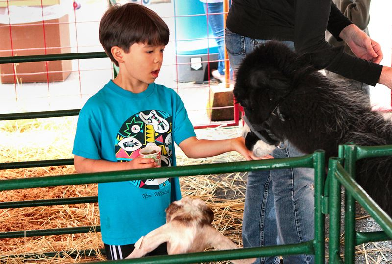 by: DAVID F. ASHTON - Xavier Watson, from the Mt. Tabor Neighborhood, meets animal friends who are ready for a handout, at the petting zoo.