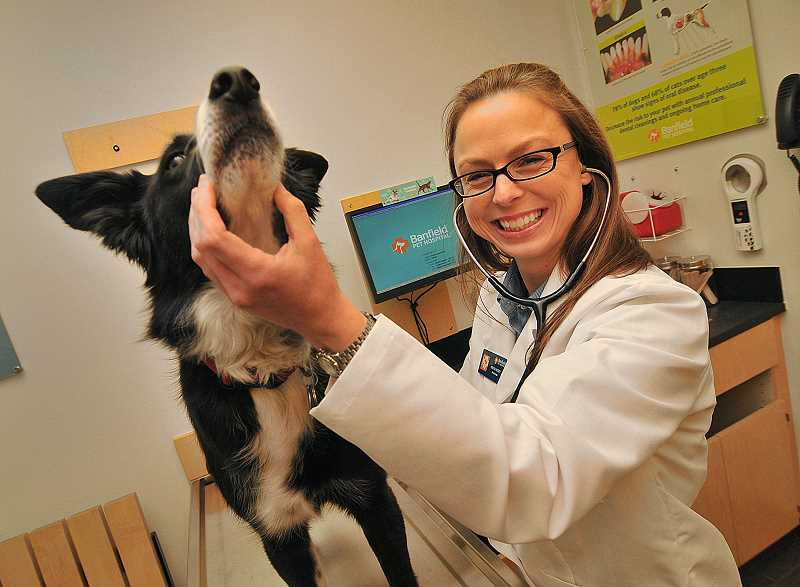by: REVIEW PHOTO: VERN UYETAKE - Murray the dog is getting better medical care than ever now that he is a patient of Dr. Kristin Hussey at the new Banfield Pet Hospital in Lake Oswego.