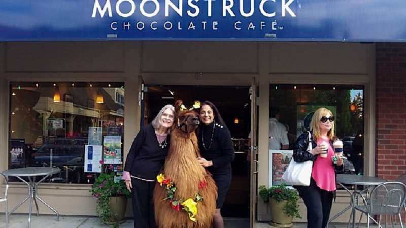 by: SUBMITTED PHOTO - Customers of Moonstruck Chocolate Café in Lake Oswego gathered to express farewells to baristas and friends on May 26, the last day of business for the store. To ease the pain, Rojo the therapy llama was present. Pictured here are Joan Maiers, left, Rojo and Charu Nair, frequenters of the business. Maiers had held her monthly literary series at Moonstruck. The series will continue in the fall at a nearby location.