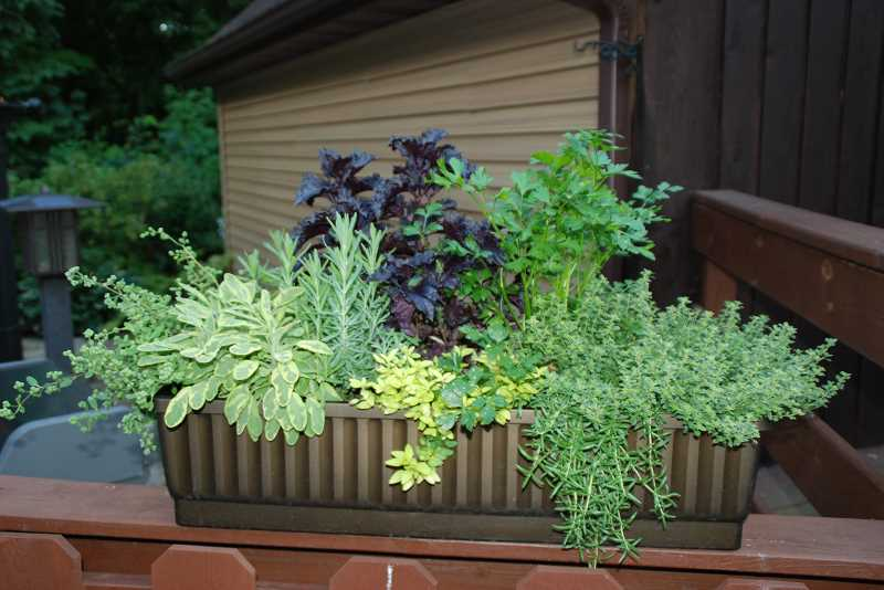 by: SUBMITTED PHOTO  - Use container gardens to create dividers between outdoor living spaces in your yard.