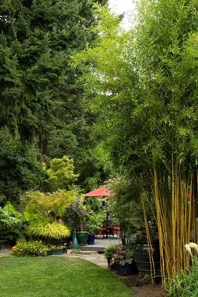 by: SUBMITTED PHOTO - Mike and Linda Darcys garden on Prestwick Road in Lake Oswego is one stop on the upcoming Garden Conservancy and Hardy Plant Society of Oregon tour.