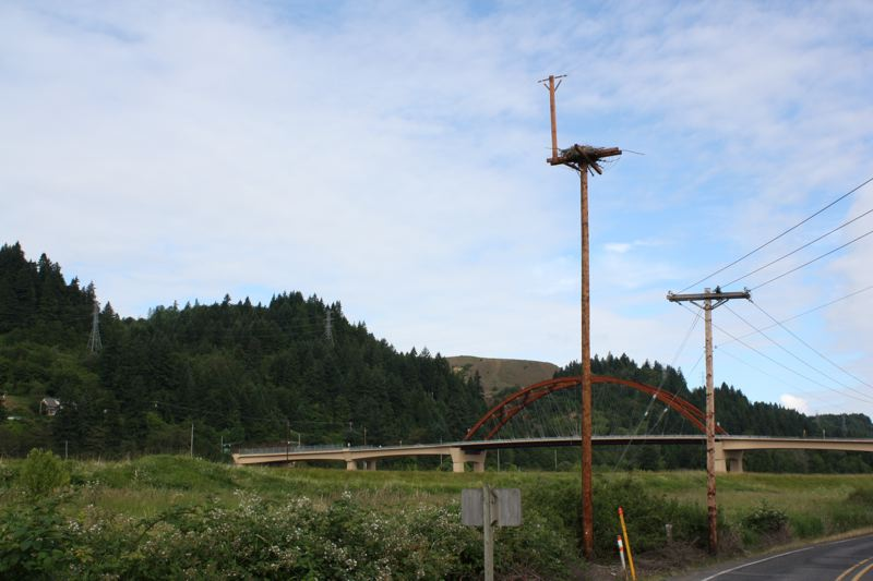 by: SPOTLIGHT PHOTO: ROBIN JOHNSON - The osprey platform installed this spring on Northwest Gillihan Loop Road has already been occupied by a family of osprey.