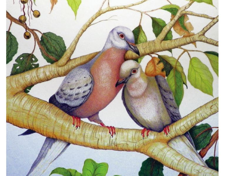 by: CONTRIBUTED PHOTO - Dee Wagoner's colored pencil drawings honoring extinct North American birds are featured in the July show at Sequoia Gallery + Studios in Hillsboro. See July 2 listing for details.