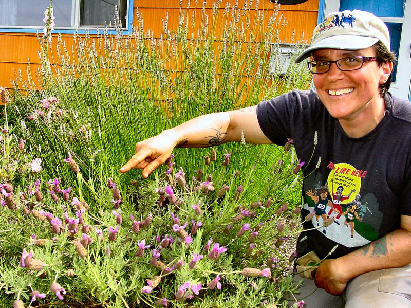 by: MERRY MACKINNON - When Xerces Societys Staff Scientist Celeste Mazzacano moved into her Woodstock home, she transformed her front yard from lawn to a flower garden, which now attracts many of the native bees and other pollinators that the Xerces Society works to protect.