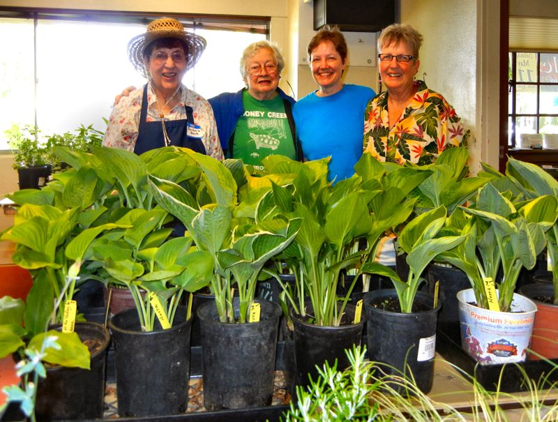 by: ELIZABETH USSHER GROFF - On the day before the annual Woodstock Plant Sale, the north room of the Woodstock Community Center became a sea of green.  Helping with the preparations were, from left: Barbara Beck, Master Gardener; Jan Elliott, and daughter Karen Krettler, who over the years have donated thousands of hostas, peonies, and tomato plants; and Shelly Keach, who prepared for the sale with passion, persistence, and pizzazz.