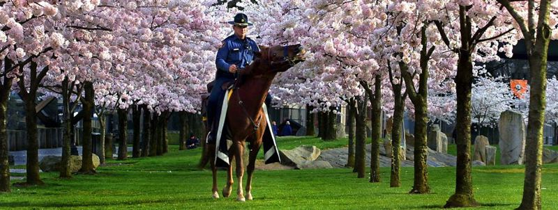 by: TRIBUNE FILE PHOTO: L.E. BASKOW - Supporters of the Portland Police Bureau's Mounted Patrol have raised half of their goal to save the unit from budget cuts.