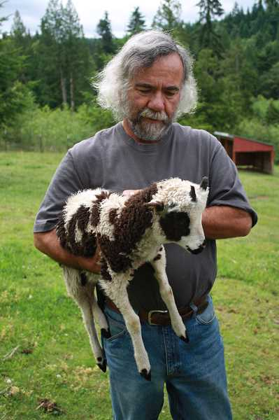 by: POST PHOTO: NEIL ZAWICKI - Jeff Jaqua holds Chong, the newest Jacob sheep at Drumcliffe Farm east of Sandy.