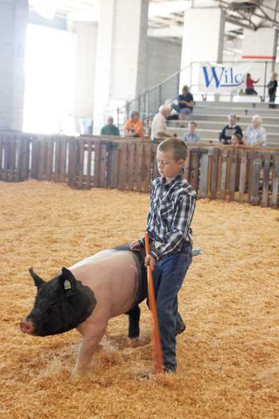 by: PHIL HAWKINS - Fourth-grader Hayden Schindler guides his pig at Showmanship at Marion County Fair on Friday morning.