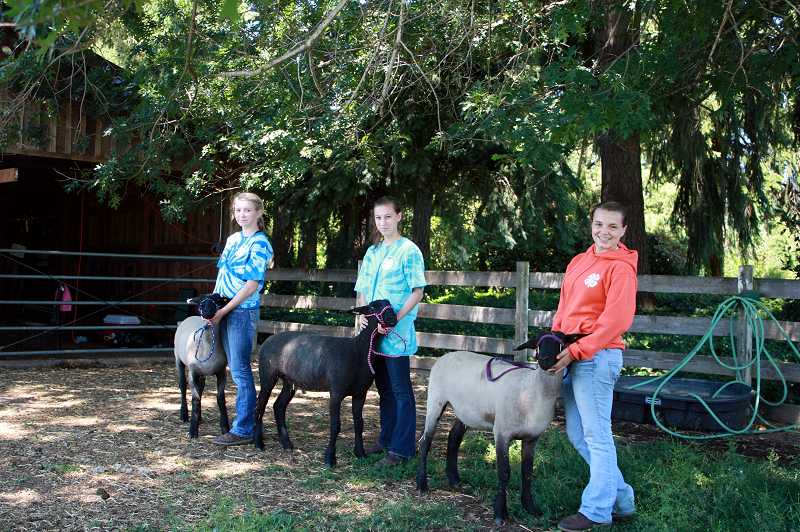 by: NEWS-TIMES PHOTO: MICA ANNIS - Left to right: Maddi Gross, Kathleen Barto and Natalie Allie of the Blooming Livestock and Rabbits 4-H Club will show their lambs at the Washington County Fair starting Thursday.