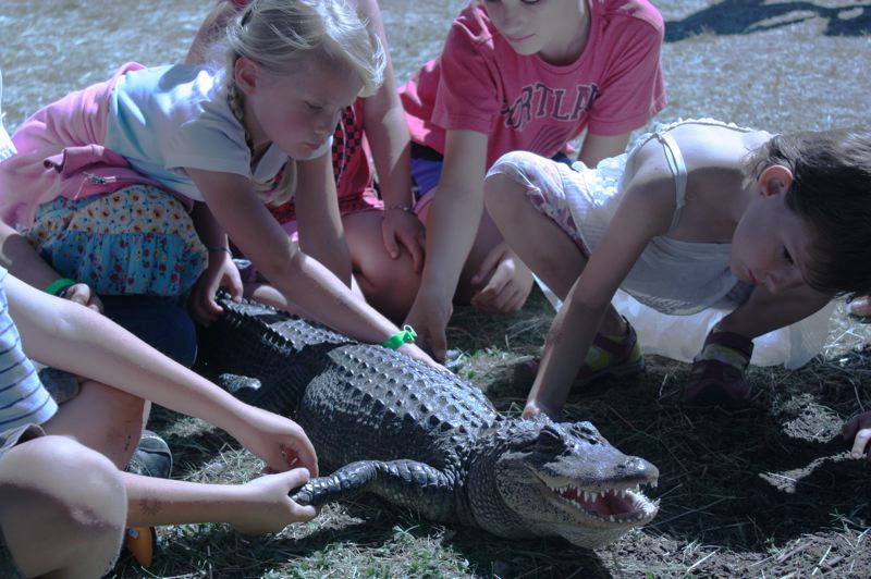 by: SPOTLIGHT PHOTO: ROBIN JOHNSON - Children at the Columbia County Fair huddle around Little Al, a 25-year-old American Alligator that belongs to Brads World of Reptiles. On Saturday, July 20, the alligator bit a 5-year-old boy on the arm, leaving minor puncture wounds.
