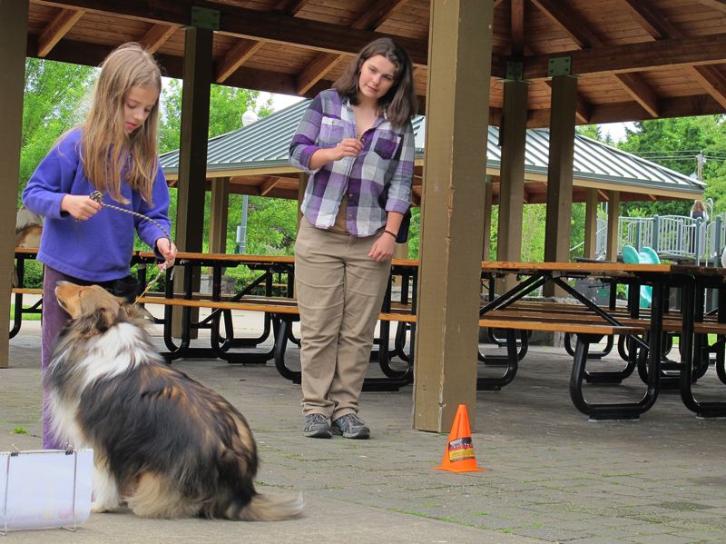 by: HILLSBORO TRIBUNE PHOTO: KATHY FULLER - Sarah Schmidt, left, practices giving commands to her Sheltie, Rip, while 4-H leader Rachael Oster gives pointers. The group practices for dog show competitions about once a week. Oster started the group this year with an eye to having the group members compete at American Kennel Club dog shows.