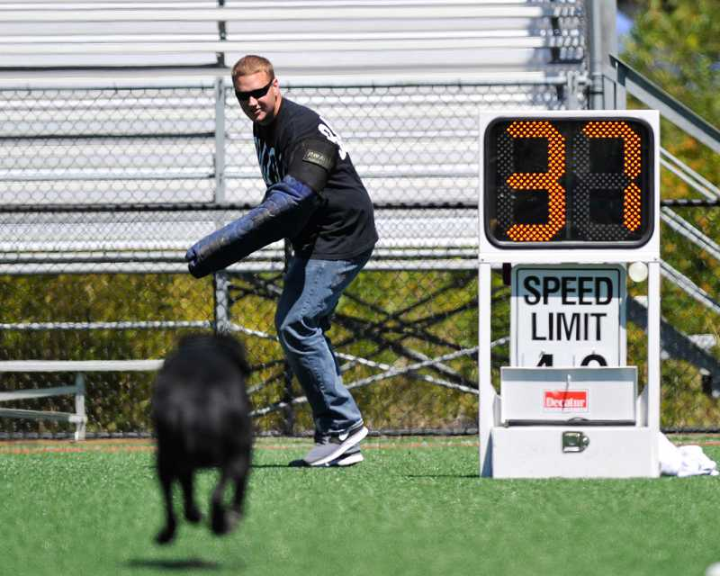by: SUBMITTED PHOTO: JOHN LARIVIERE - Officer Matt Barrington plays the bad guy as K-9 Officer Barak shows off his speed during the Beaverton Police K-9 Unit demonstration during Saturday's Party in the Park.