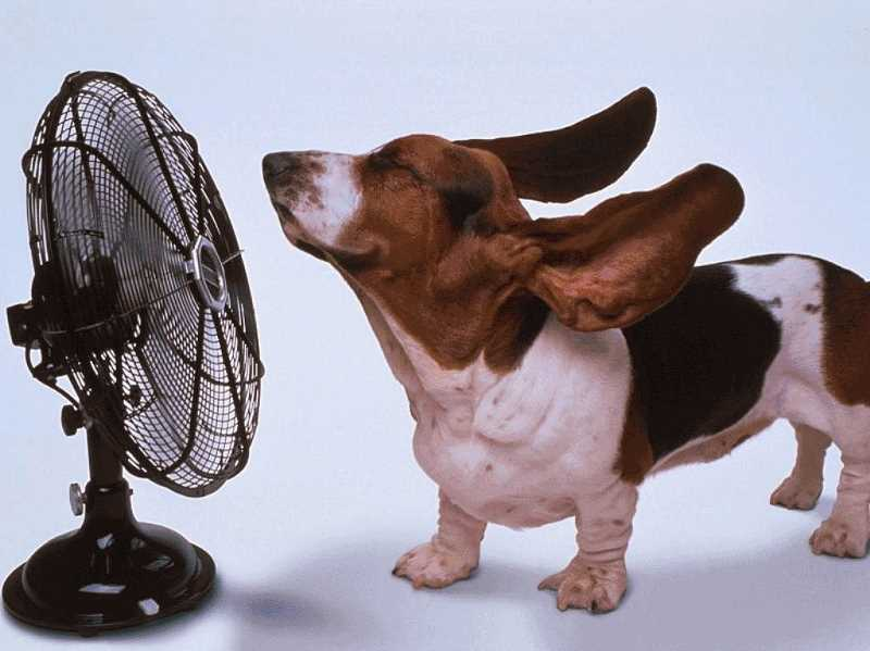 by: SUBMITTED ART - Dogs and cats dont sweat like people. The Clackamas County Dog Services shares tips on keeping pets cool during hot summer weather.
