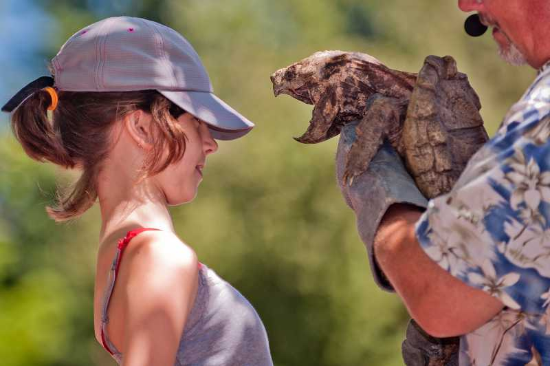 by: SPOKESMAN PHOTO: JOSH KULLA - The Reptile Man brought many friends, including this snapping turtle, to the librarys summer reading celebration on July 25.
