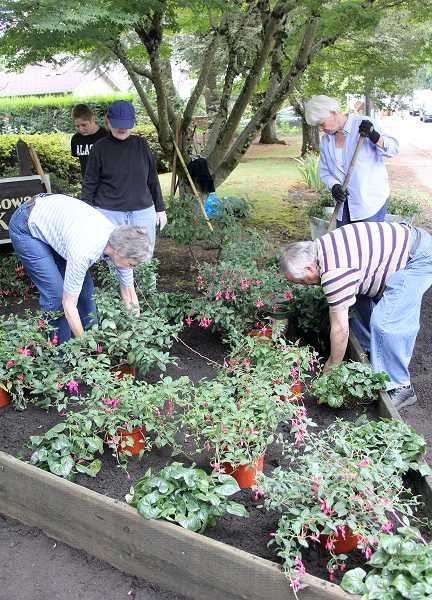 by: JEFF MCDONALD - Knot Garden Society members (lower left, clockwise) Sharon Corning, Patricia Hyatt, Ellen Bandelow and Colin Brown plant fuchsias at the Alvah G. Cowan Park Aug. 2 in Woodburn.
