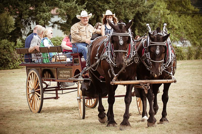 by: CONTRIBUTED PHOTO: BRIAN PASKO PHOTOGRAPHY - The Eastwind Percherons take an easy pace as they pull each wagonload of people around the many acres of the two Boring school campuses, where the Boring Celebration is held each year.