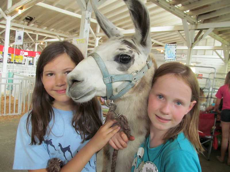 by: ELLEN SPITALERI - West Linn residents Lauren True, 10, left, and Holly Jones, 10, pose with Olympe, Hollys standard llama at the recent Clackamas County Fair. Both girls are members of the Spring Creek Sproingers.