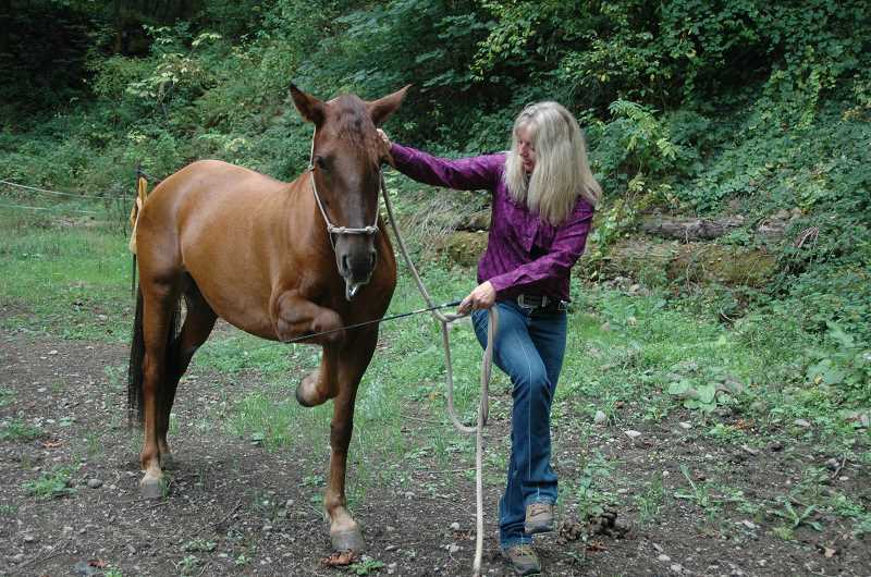 by: ISABEL GAUTSCHI - Trainer Stacey Riggs has Tangled demonstrate a Spanish walk, which involves an exaggerated extension of the leading front leg. Tangled was a wild mustang. Riggs was able to mount Tangled only three days into her adoption.