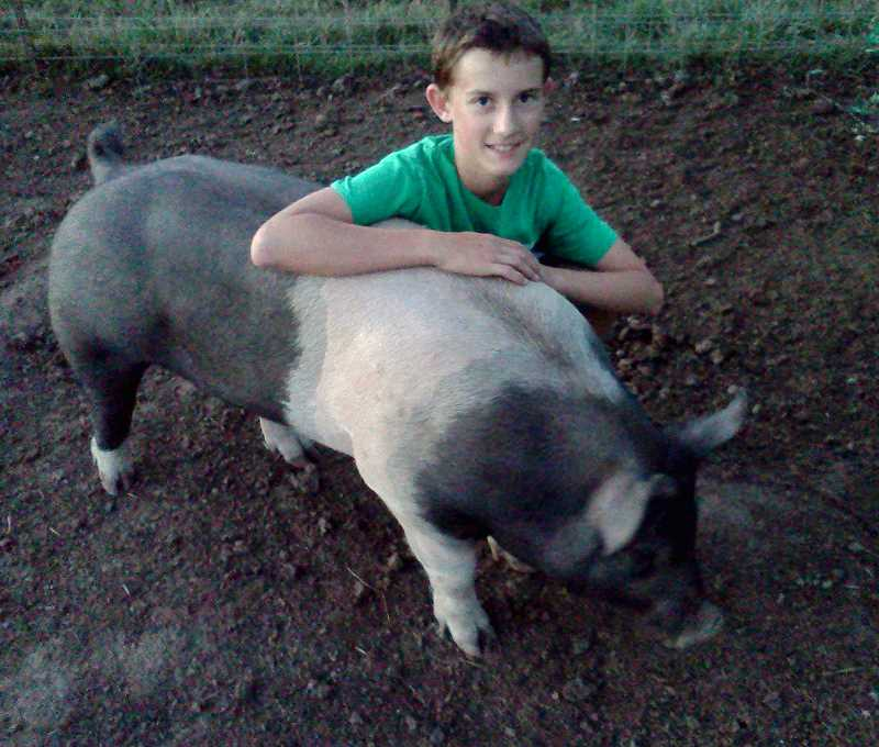 by: SUBMITTED - Turner Lear and his prize pig