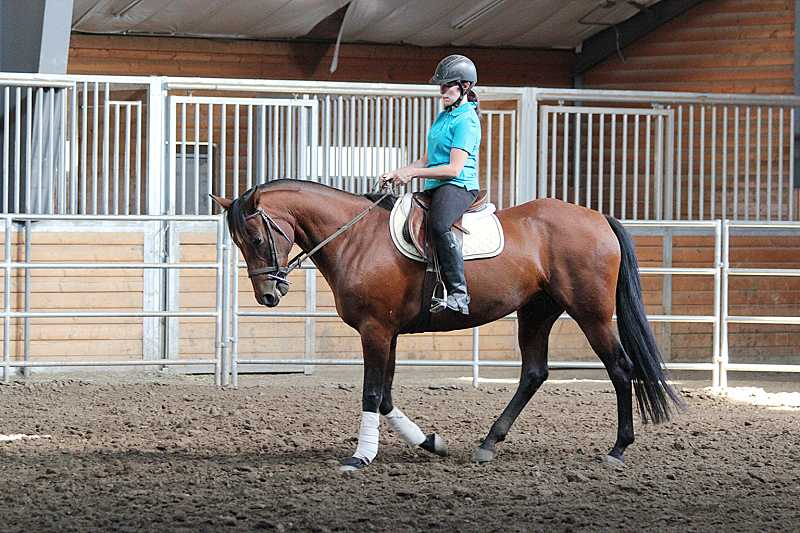 by: HOLLY M. GILL - Courtney Haber, of Bend, rides HoneyBadger in the arena during her public debut at SGF Sporthorse in Sisters on Sept. 12.  The horse's owner hopes to find a good home for HoneyBadger.