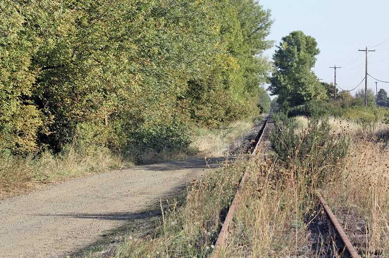 by: HILLSBORO TRIBUNE PHOTO: DOUG BURKHARDT - Most of the once-busy railroad corridor west of Banks is now overgrown with vegetation. The route between Banks and Tillamook has been out of service since December 2007.