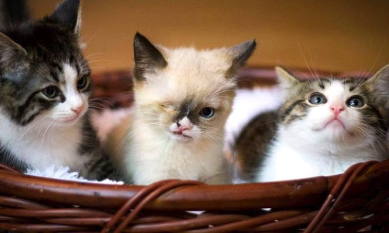 by: AMY WHO PHOTOGRAPHY - Sir Stuffington with his brothers Nugget and Dexter.