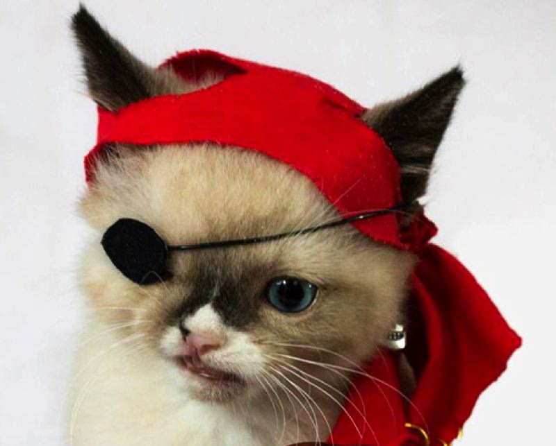 by: AMY WHO PHOTOGRAPHY - The pirate costume that shot Sir Stuffington to internet fame.