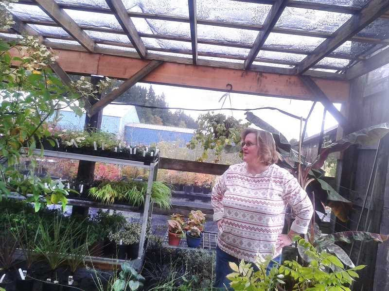 by: ISABEL GAUTSCHI - Wendy Dauenhauer shows off some shade plants offered at the Old Farmhouse Feed & Garden Center. She said the business plans to add greenhouses and a produce stand to the property in the future.