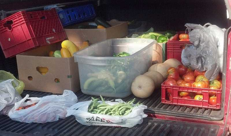 by: DAVID MORELLI - The community garden produced more than 3,500 pounds of food, much of which was loaded into a volunteer's truck and donated to the AWARE Food Bank.