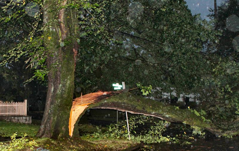 by: DAVID F. ASHTON - This huge Eastmoreland tree split, and came crashing down across S.E. Woodstock Boulevard at 34th Avenue at Reed College.