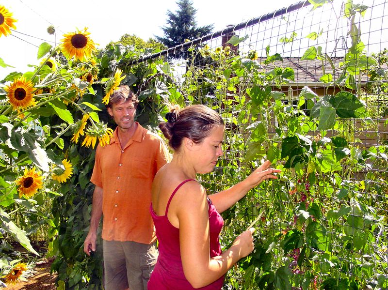 by: MERRY MACKINNON - Seemingly almost lost in their yard, Zane Ingersoll looks on as Marisha Auerback picks beans off a trellis made out of the feeder pipe from their decommissioned gas furnace. The pair, whove lived in Woodstock for a year and a half, have converted their house and yard into a permaculture demonstration project.