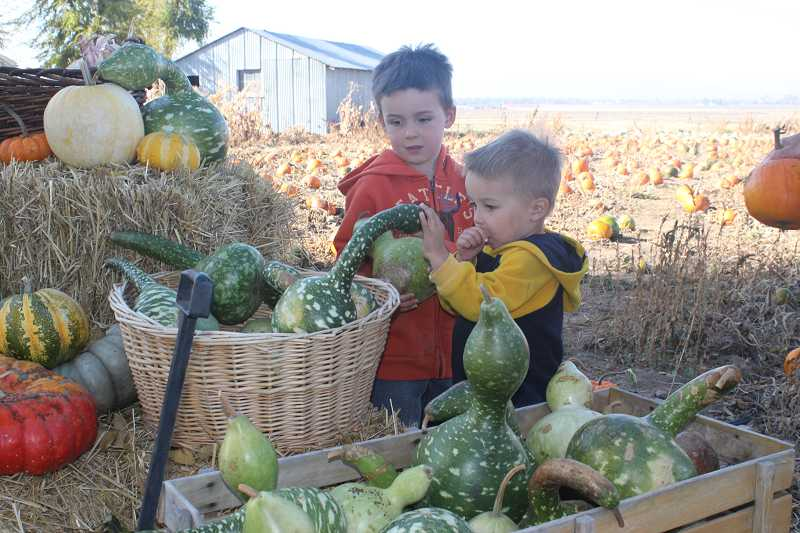 Kids enjoy a visit to a pumpkin patch in Culver.
