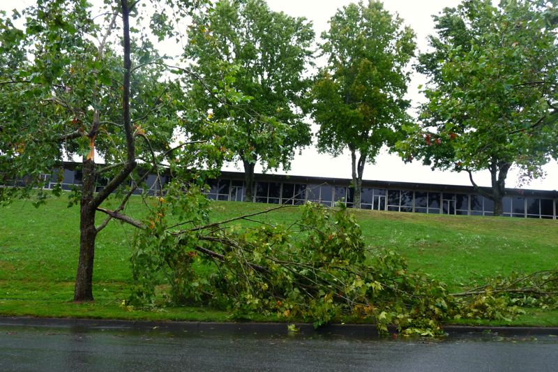by: CONNECTION PHOTO: DREW DAKESSIAN - The destruction of typhoon Pabuk in Southwest Portland included a fallen tree near Rieke Elementary School.