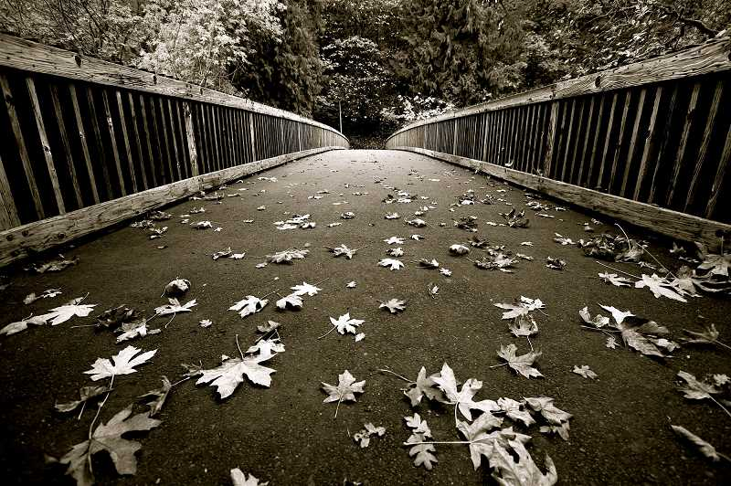 'Footbridge in the Fall at George Rogers Park' by Haven Seagraves took first place in the Places in Lake Oswego category.