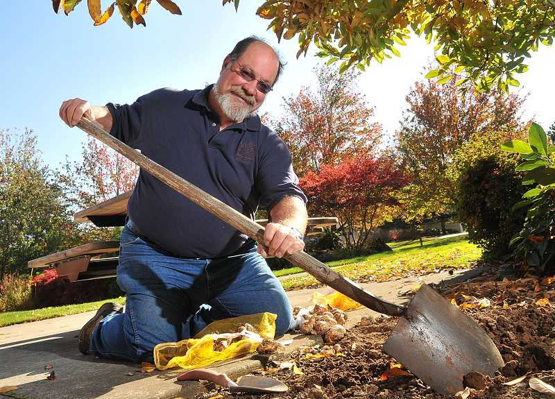 by: TIDINGS PHOTO: VERN UYETAKE - Along with his park maintenance duties, Ron Jones is planting flower bulbs around West Linn to enhance its aesthetic appeal.