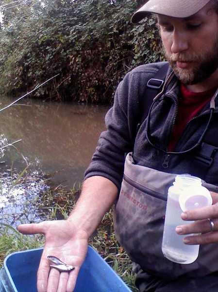 by: ODFW - Ed Sparks holds the first Oregon chub to be found in the lower Willamette since Eisenhower was president.