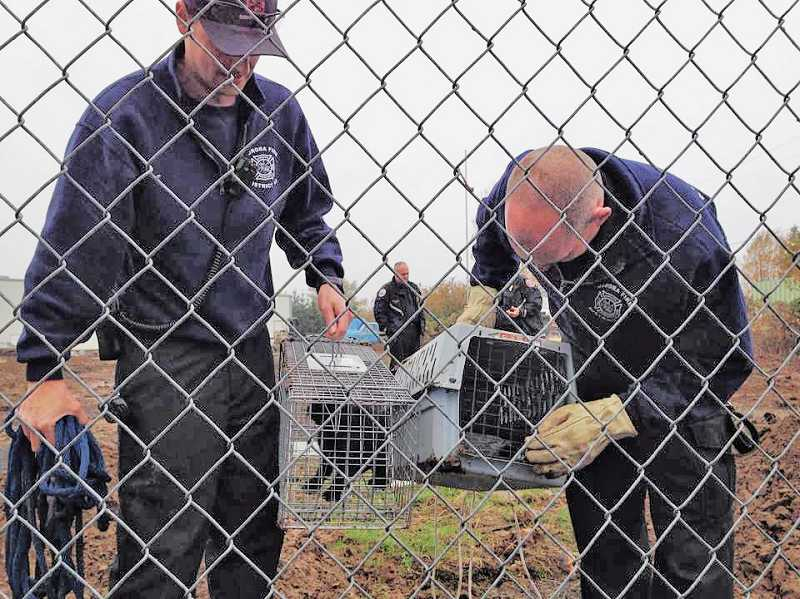 by: SHAWNA DRON-GENTERT - Aurora Fire District lieutenants Tim Gloy, left, and Dave Fincher check on the two feral kittens that Aurora firefighters rescued from the bottom of a deep hole.