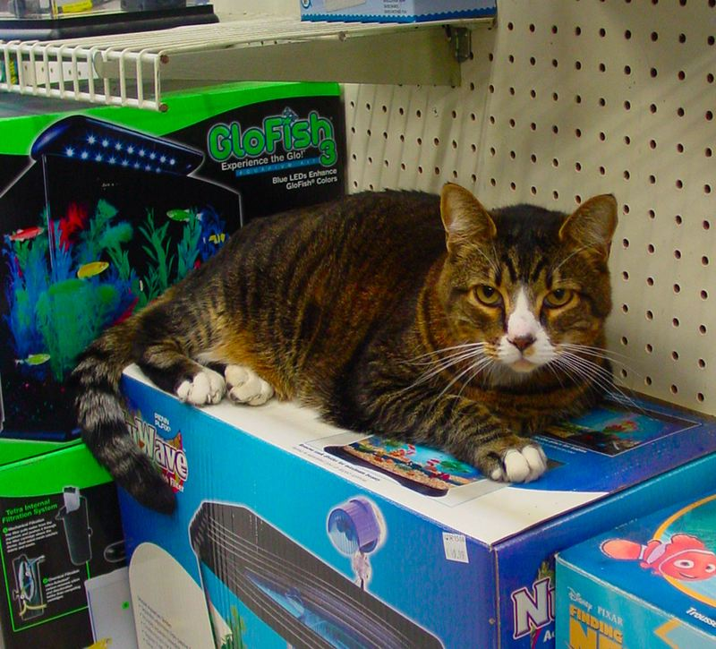 by: MERRY MACKINNON - An apprehensive cat: Jackson, the housecat at Animal Crossing, has sensed that somethings up - ever since the pet stores owners were told theyd have to close their doors and find a new location.