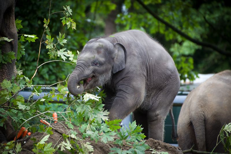 by: METRO/OREGON ZOO - The public is invited to Lily's birthday party on Nov. 30 at the Oregon Zoo.
