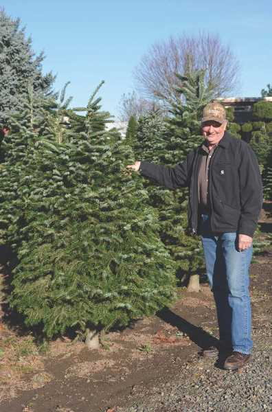 by: JANIS BRENTANO - Ron Franke of Franke's Christmas Trees in Woodburn has been growing Christmas trees for more than 30 years and advises the best way to ensure you get a fresh tree is to visit a tree farm and have one cut.