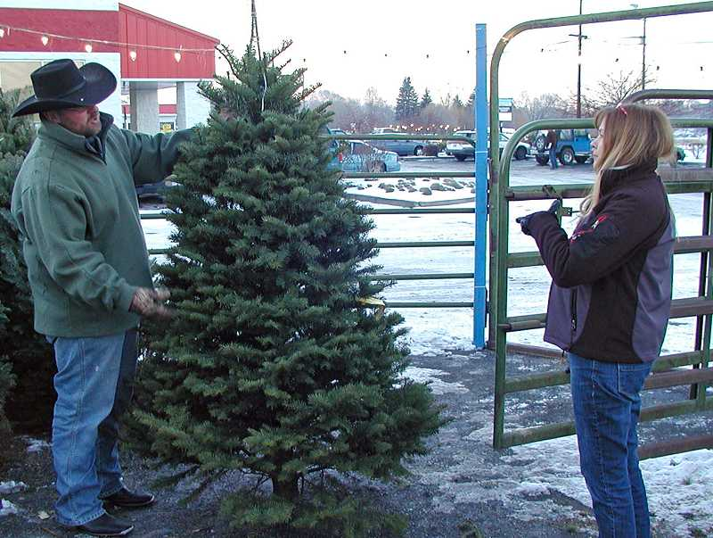 by: RON HALVORSON - Future Farmers of America's Dan McNary examines a Christmas tree at the FFA lot.