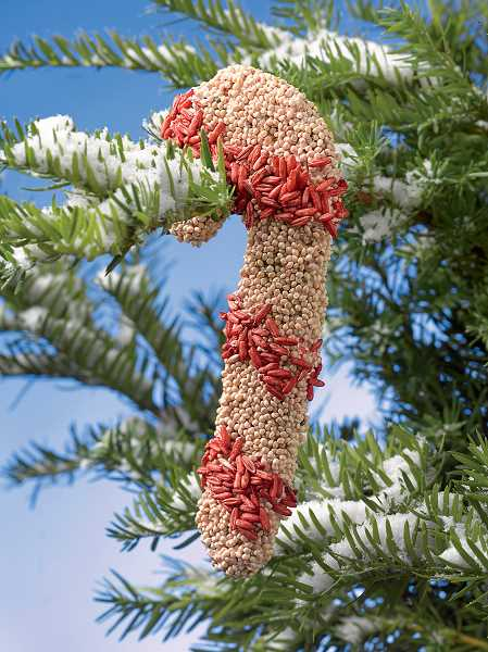 by: SUBMITTED PHOTO: GARDENERS SUPPLY CO. - Birdseed ornaments can add some holiday cheer to the landscape while providing much-needed nutrients for the birds.