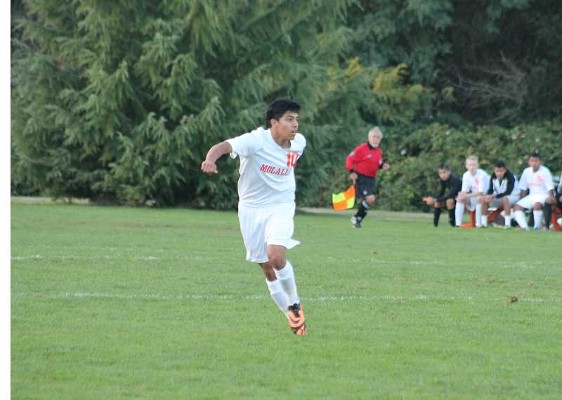 by: CORY MIMMS - Molalla's Luis Rojas, All-State First Team, 4A boys soccer. Junior, #10.