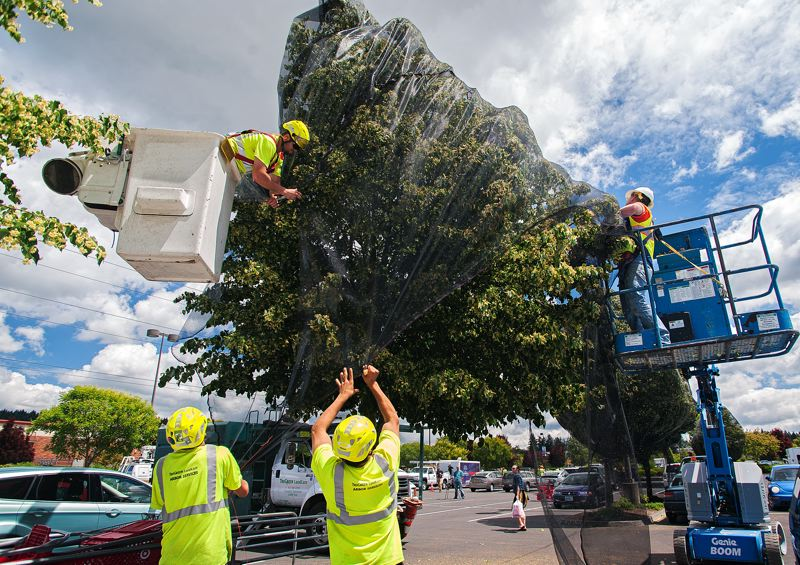 by: SPOKESMAN PHOTO: JOSH KULLA - Crews cover linden trees covered with insecticide in the Wilsonville Target parking lot.