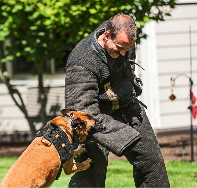 by: SPOKESMAN PHOTO: JOSH KULLA - New Wilsonville Chief of Police James Rhodes gets down and dirty during a K9 unit demonstration at Marquis Wilsonville.