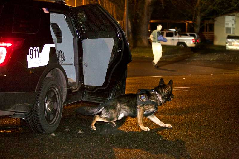 by: TIMES PHOTO: JAIME VALDEZ - Tigard K-9 Officer Baxter jumps out of a patrol SUV and runs towards the 'bad guy,' being portrayed by officer Mike Powers during routine training.